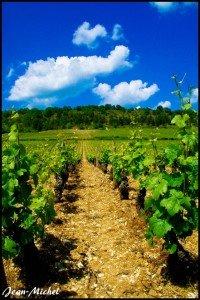 Vigne de Bourgogne